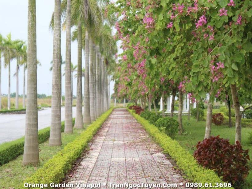 đường ven hồ tại Khu biệt thự Vườn Cam