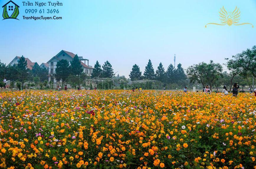 Vườn hoa bát ngát sắc hương tại The Phoenix Garden
